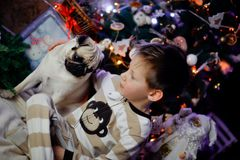 The boy with a pug Stock Photography
