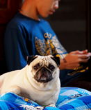 Boy and pug Stock Photography