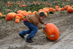 Boy in pumpkin patch Royalty Free Stock Photos