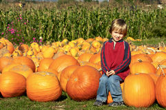 Boy at Pumpkin Patch. Cute young boy sitting on a pumpkin at the pumpkin patch Stock Photos