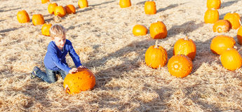 Boy at pumpkin patch Stock Photo