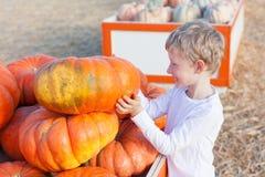 Boy at pumpkin patch Royalty Free Stock Photos