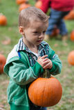 Boy pumpkin picking. Little boy carrying a big heavy pumpkin while pumpkin picking Stock Image