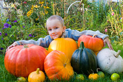 Boy with pumpkins Stock Photos