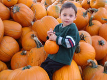 Boy among pumpkins. Young boy siting among pumpkins on the pumpkin patch Royalty Free Stock Photo