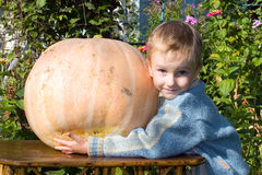 Boy and pumpkins Stock Image