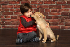 Boy with a puppy Royalty Free Stock Photo