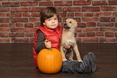 Boy with a puppy Royalty Free Stock Image