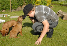 Boy and puppy 6 weeks old, playing. Cute and lovely Rhodesian Ridgeback puppy, 6 weeks old playing with a boy in the backyard in the grass. The little male is Stock Photography