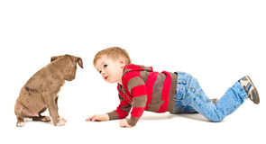 Boy and puppy looking at each other Royalty Free Stock Images