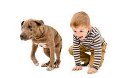 Boy and puppy pit bull playing together Royalty Free Stock Photos
