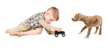 Boy and puppy pitbull. Play together toy car Stock Images