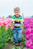 Boy in the purple tulips field Royalty Free Stock Image