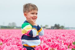 Boy in the purple tulips field Royalty Free Stock Images
