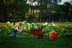 Boy pushing with wheelbarrow of gourds stock image