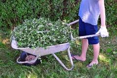 Boy pushing wheelbarrow royalty free stock image