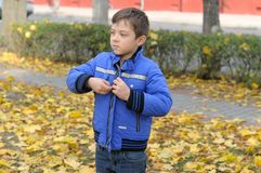 Boy puts on a blue jacket walking in the autumn park Stock Photography