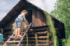 Boy puts the hay in hayloft Royalty Free Stock Photo