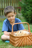 Boy and rabbit Royalty Free Stock Photos