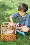 Boy and rabbit Stock Photography