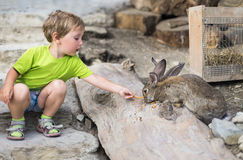Boy and rabbit Stock Images