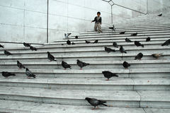 The boy racing through pigeons on the stairs Stock Photos