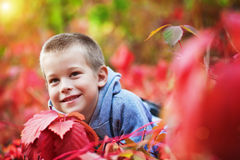 Boy in the rad leaves Royalty Free Stock Photography