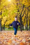 Boy in the rad leaves Stock Image