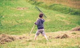 Boy raking dry hay with rake on field Stock Image