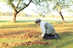 Boy raking leaves. Little boy in grey kneeing on green grass raking leaves fallen down on plantation Royalty Free Stock Photography