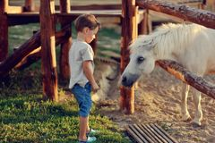 The boy on the ranch royalty free stock images