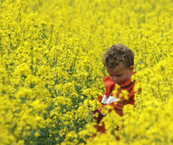 Boy in Rapeseed Stock Photos