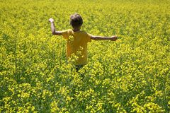 Boy in rapeseed field Royalty Free Stock Photography