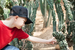 Boy reaches out to the cactus. Royalty Free Stock Image