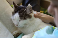 Boy reading book with cat napping Royalty Free Stock Images