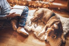 Boy reading book on the floor near slipping his beagle dog on sheepskin in cozy home atmosphere. Peaceful moments of cozy home stock photo