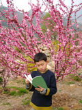 Boy Reading before a Pink flower Tree in Spring Royalty Free Stock Photos