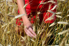 Boy in red clothes in corn, barley field Stock Photos