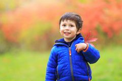 Boy with a red maple leaf attached in the heart region with great pride as Canadian citizen. Portrait of little white Caucasian b. Oy holding autumn leaves stock photos