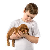 Boy with red puppy isolated on white background. Kid Pet Friendship Royalty Free Stock Images