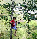 A boy relaxing on tree in Banaue, Philippines Royalty Free Stock Photos