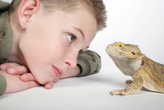 Boy with reptile. Closeup of little boy admiring pet lizard Stock Photography
