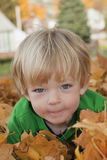 Boy Resting in Leaves Stock Image