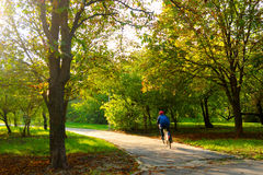Boy riding bicycle on the park alley Stock Image