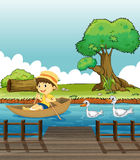 A boy riding on a boat followed by ducks Royalty Free Stock Photos
