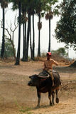 Boy riding a buffalo in Myanmar countryside. Stock Image