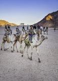 Boy Riding Camel Stock Photo