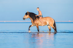 The boy riding a horse in the sea. Young rider on horse swim in water in sunset. Big horse with child walking on blue background Stock Photos