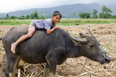 Boy riding water buffalo Stock Photography