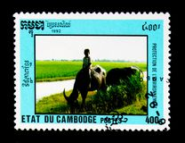 Boy riding on Water Buffalo Bubalus bubalis, Environment Protection serie, circa 1992. MOSCOW, RUSSIA - NOVEMBER 24, 2017: A stamp printed in Cambodia shows Boy Royalty Free Stock Images